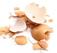 shells-sulfur